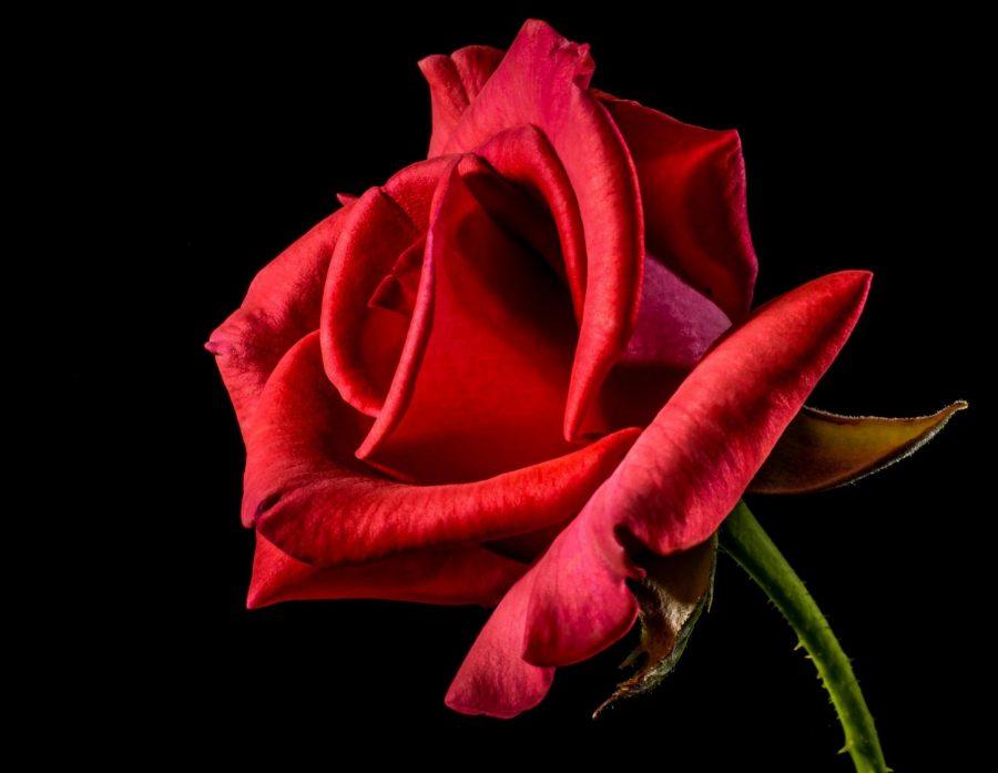 How She Rose